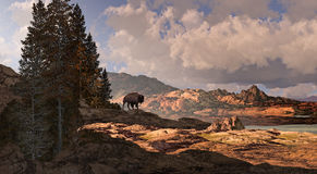 Mountain Buffalo Stock Images