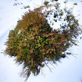 Mountain bush covered with snow. Royalty Free Stock Images