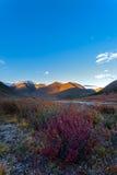 Mountain bush evening Altai Royalty Free Stock Photos