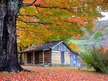Mountain Cabin in Autumn. Fall colors surround a mountain cabin in the mountains during peak season Stock Images