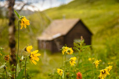 Mountain Cabin With Sunflowers Stock Photography
