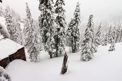 Mountain Cabin During a Winter Blizzard. Mountain cabin burried in a mountain of snow during a winter blizzard near Lake Tahoe California/Nevada Royalty Free Stock Photos