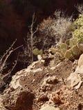 Mountain cactus. Hiking outdoor red rock mountain cactus royalty free stock image