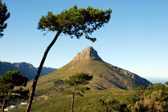 Mountain in Capetown. Landscape with mountain Lion's Head in Capetown (South Africa royalty free stock images