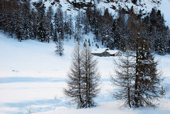 Mountain Chalet. A mountain shelter framed by frozen fir trees Royalty Free Stock Images