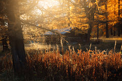 Mountain chalet in autumn forest Stock Image