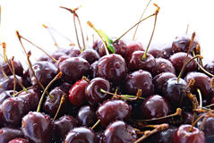 Mountain cherries Stock Images