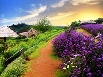 Mountain in Chiang Mai with its Beautiful flowers. The path way along violet flowers to the midst of mountains Stock Images