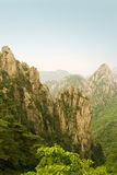Mountain in china, pine trees and steep cliff. The worldwide famous peaks of Huangshan in China Stock Image