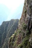 Mountain Cliff. Covered with bromeliads, mountains in background Royalty Free Stock Images