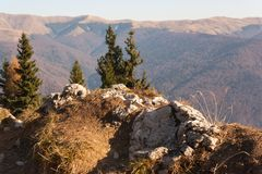 Mountain cliff in bright sunlight.Fir trees and in the background. Rocks in the foreground Stock Photos
