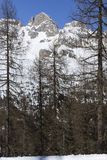 Winter in woods, San Pellegrino pass Royalty Free Stock Photography
