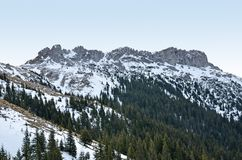 Mountain cliffs and pine forests Royalty Free Stock Images