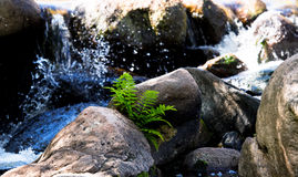 Mountain cold stream Royalty Free Stock Photography