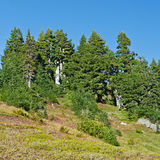 Mountain forest and meadow Stock Image