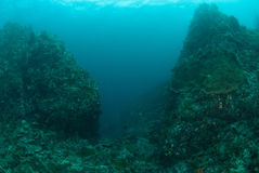 Mountain of coral reef in Ambon, Maluku, Indonesia underwater photo Stock Photography