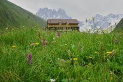 Mountain cottage above Juta, Georgia. Wildflowers on the meadow. Royalty Free Stock Image