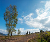 Mountain country road. Mountain dirt road with lonely birch and fleecy clouds. Three shots composite picture Stock Images