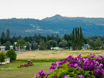 Mountain Country View with Flowers Royalty Free Stock Photography
