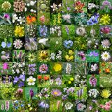 Mountain & countryside flowers mosaique Stock Photos