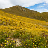 Mountain cover with tussock and alpine flower Stock Image