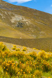 Mountain cover with tussock and alpine flower Stock Images