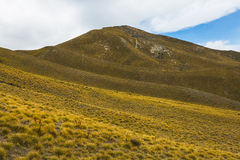 Mountain cover with tussock Stock Image