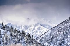 Mountain Covered With Trees and Snow stock photo