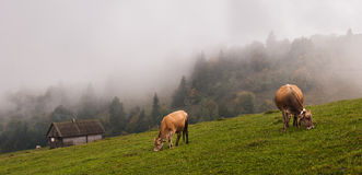 Alps nature. Animals in alps Royalty Free Stock Images
