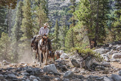 Mountain Cowboy Stock Photos
