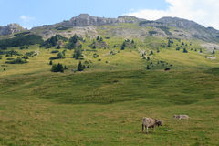 Mountain and cows Royalty Free Stock Photography