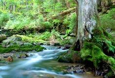 Mountain creek. In the national park Sumava-Czech Republic Royalty Free Stock Photo