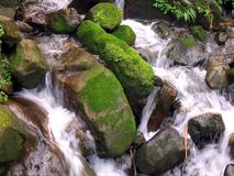 Mountain Creek. With white water and moss-covered rocks Stock Photography