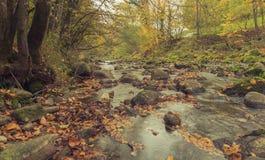 Mountain creek on autumn Stock Photo