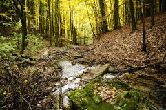 Mountain creek in the autumn beech forest. Stock Image