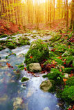 Mountain creek in the autumn forest in Triglav national park Stock Photography