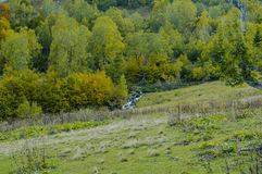 Mountain Creek. Autumn in mountains. Small creek Royalty Free Stock Image