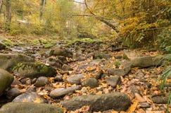 Mountain creek on autumn. Swiss Royalty Free Stock Photography