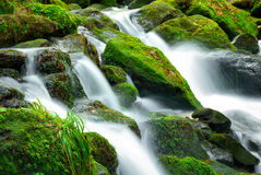 Mountain creek cascade. With fresh green moss on the stones, long exposure for soft water look Royalty Free Stock Photography