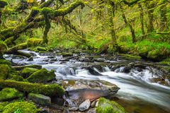 Mountain creek of Clare Glens. In Co. Limerick, Ireland Royalty Free Stock Photos