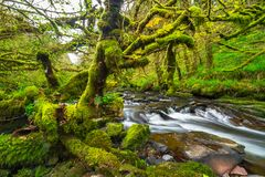 Mountain creek of Clare Glens. In Co. Limerick, Ireland Stock Photo