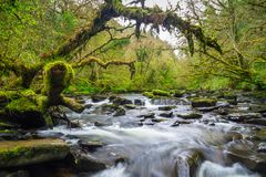 Mountain creek of Clare Glens. In Co. Limerick, Ireland Royalty Free Stock Images