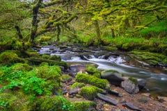 Mountain creek of Clare Glens. In Co. Limerick, Ireland Stock Photos