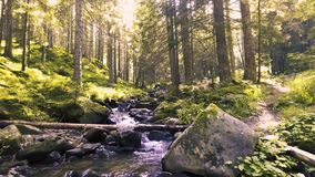 Mountain creek in a coniferous green forest stock footage