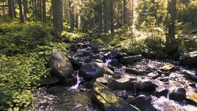 Mountain creek in a coniferous green forest stock video footage