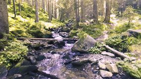 Mountain creek in a coniferous green forest stock video