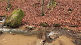 Mountain creek in deciduous forest; on site sound stock video footage