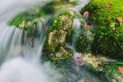 Mountain creek detail with mossy rocks and crystal clear water Royalty Free Stock Photo
