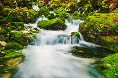 Mountain creek detail with mossy rocks and crystal clear water Stock Photography