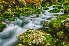 Mountain creek detail with mossy rocks and crystal clear water Stock Photos